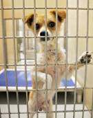 Dog in an animal shelter — Foto de Stock