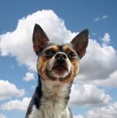 享受户外的狗 — 图库照片