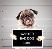 Bad dog — Stock Photo