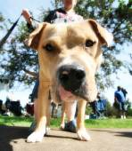 Cute dog at local public park — Stock Photo
