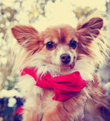 Cute dog outside — Stock Photo