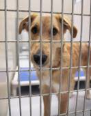 Dog in shelter — Stock Photo