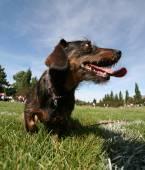 Dog at local public park — Stock Photo