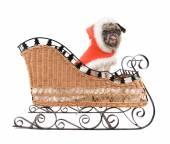 Pug in santa costume — Stock Photo