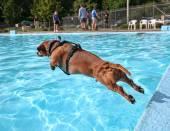 Dog at pool — Foto de Stock