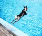 Dog at swimming pool — Stock Photo
