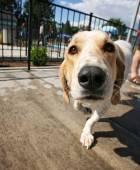 Dog swimming at pool — Foto de Stock