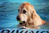 Dog having fun at pool — Stock Photo