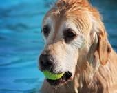 Dog having fun at pool — Foto de Stock