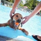 Dog having fun atc pool — Stockfoto