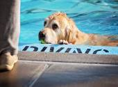 Dog having fun at pool — Stockfoto