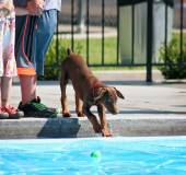 Dog having fun at pool — Stock Photo
