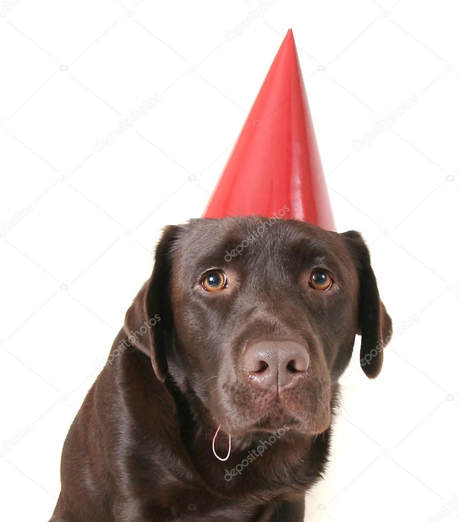 Chocolate Lab Birthday Party With Cake