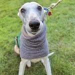 Dog at local park — Stock Photo #53630139