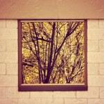Old Wooden window overlook autumn trees — Stock Photo #53632389
