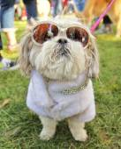 Dog at local park — Stock Photo