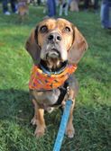 Dog at local park — Stock fotografie