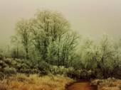 Winter trees without leaves — Stock Photo