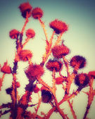 Bunch of dried up flowers — Stock Photo