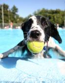 Dog at local pool — Stock Photo