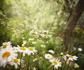 Bunch of pretty daisy flowers — Stock Photo