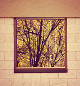 Old Wooden window overlook autumn trees — Stock Photo