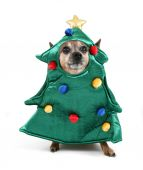 Chihuahua dressed up as tree — Zdjęcie stockowe