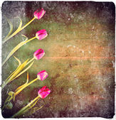 A grunge filtered photo of tulips — Stock fotografie
