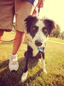 公園で草の犬 — ストック写真