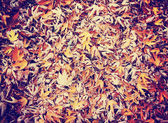 Colored autumn leaves on the ground — Foto de Stock