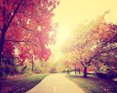 Path going though autumn park — Foto de Stock