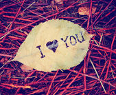 Leaf that reads i love you — Stockfoto