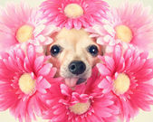 Chihuahua with flowers around head — Stock Photo