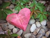 Paper heart on rock and ivy vine — Stock Photo