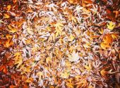 Colored autumn leaves — Stock Photo