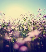Pretty pink wild flowers — Stock Photo