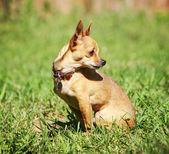 Cute dog at local park — Stock Photo