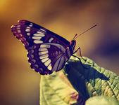 Beautiful butterfly on wild flower — Stock Photo