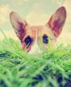 Cute dog at park — Stockfoto