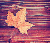 Autumn leaf on wooden background — Stock Photo