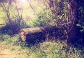 A little hidden clearing in a forest with a log and the sun rays — Fotografia Stock