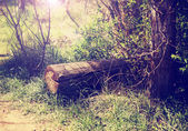 A little hidden clearing in a forest with a log and the sun rays — Zdjęcie stockowe