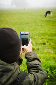 Child with smartphone taking picture of a cow — Stock Photo