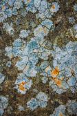 Natural pattern of lichen on the stone — Stock Photo