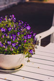 Pansy in a ceramic flowerpot on a table — Stock Photo
