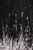 Grass in black and white — Stock Photo