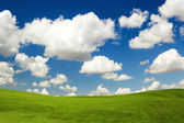 Beautiful green meadow — Stock Photo