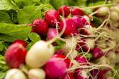 Organic Radishes — Stock Photo