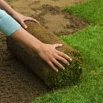 Gardener applying turf rolls — Stock Photo #68907429