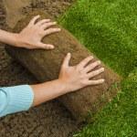 Gardener applying turf rolls — Stock Photo #68907521
